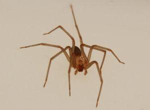 Гадание на пауке
